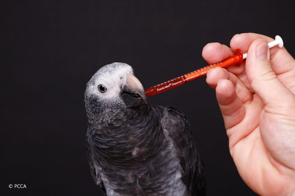 Your veterinarian can help your pet with dosing issues. This African Grey Parrot will only accept custom liquid medications provided by a compound pharmacy.